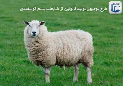 sheep-Lanolin-1