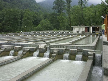 Fish breeding projects