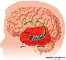 Amygdala smile, fear, worry, and connect with others