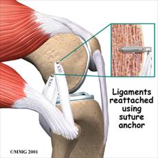 Anatomy of knee motion and strength sports report