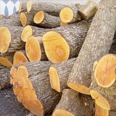 Wood products and Applications