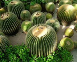 Paper is reproduced cactus