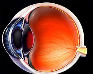 Article diseases, ocular trauma