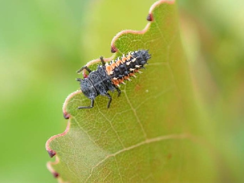 Pests Research