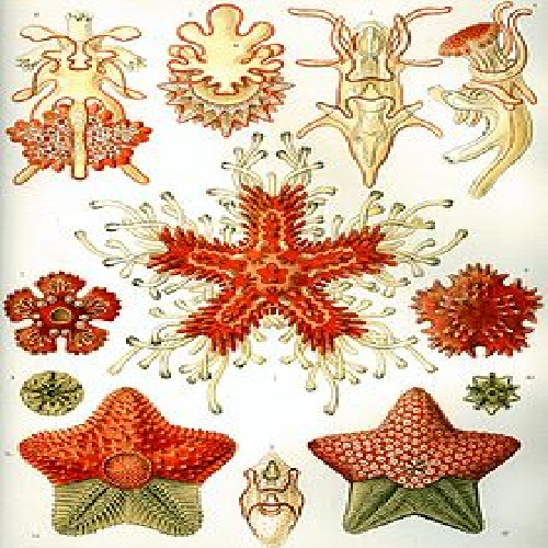 Research echinoderms