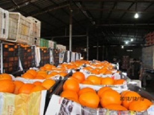 Barriers to export citrus and provide ways to increase exports