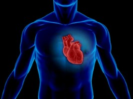 Article is to investigate the heart