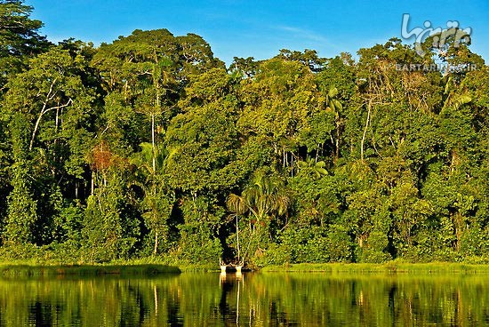 Article Amazon forest