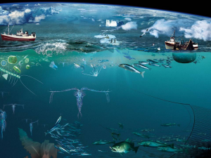 Article ecology of the sea