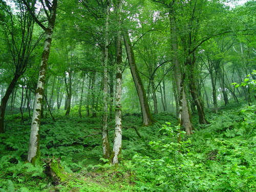Article forest