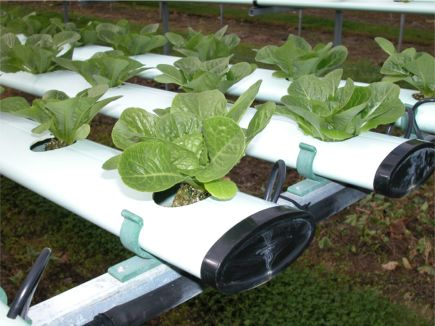 Paper hydroponic cultivation of soils