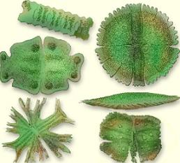 Research about the types of algae