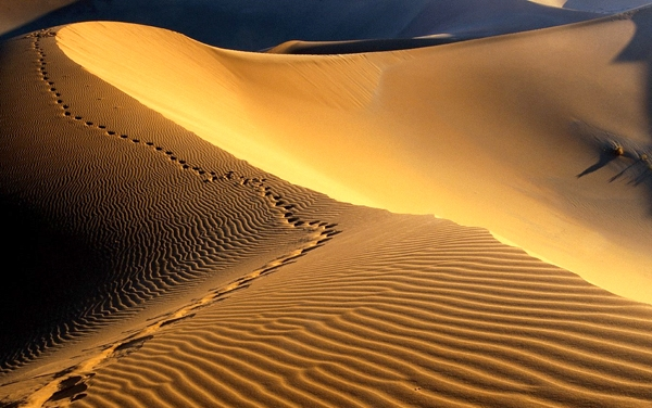 Research deserts of Iran