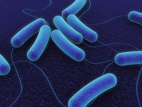 Theses bacteria