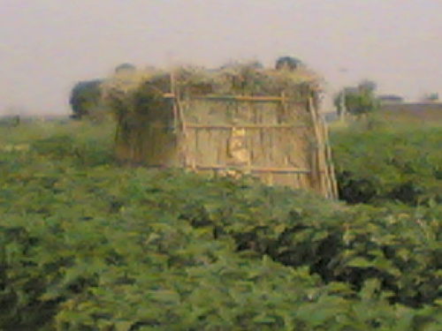 Agricultural Health thesis castle in the village of Khwaja city of Varamin
