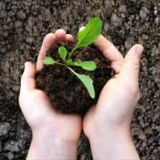 PowerPoint efficiency of organic fertilizers with an emphasis on composting