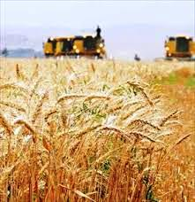 PowerPoint report increased production of crops
