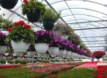 Article greenhouse
